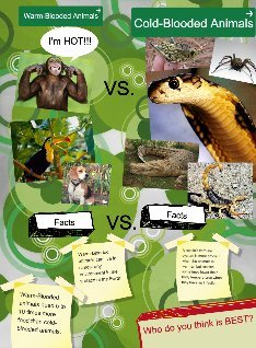 Warm-Blooded Animals vs. Cold Blooded Animals: animals, cold ...