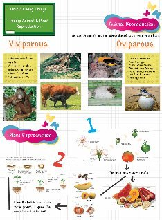 Unit 3 Living Things - Animal & Plant Reproduction
