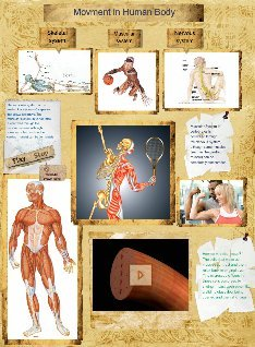 movment in human body muscular system