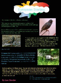 Invasive Species - The European Starling