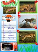 Cheetah Fact File's thumbnail